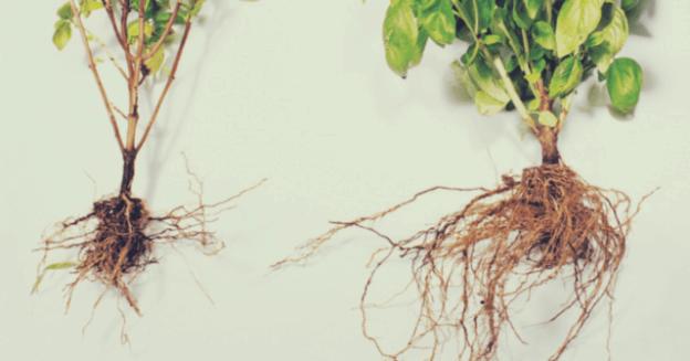Mycorrhizae 640x335